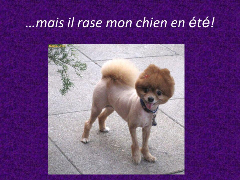 …mais il rase mon chien en été!