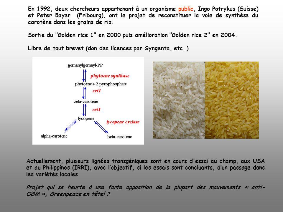 En 1992, deux chercheurs appartenant à un organisme public, Ingo Potrykus (Suisse) et Peter Bayer (Fribourg), ont le projet de reconstituer la voie de synthèse du carotène dans les grains de riz.