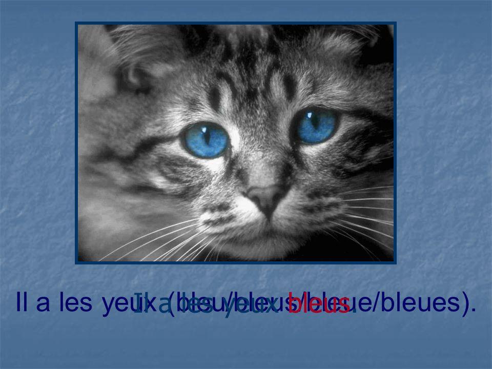 Il a les yeux (bleu/bleus/bleue/bleues).