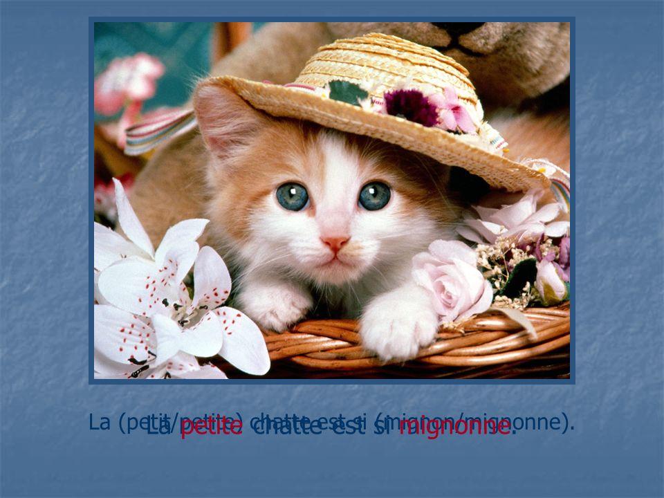 La petite chatte est si mignonne.