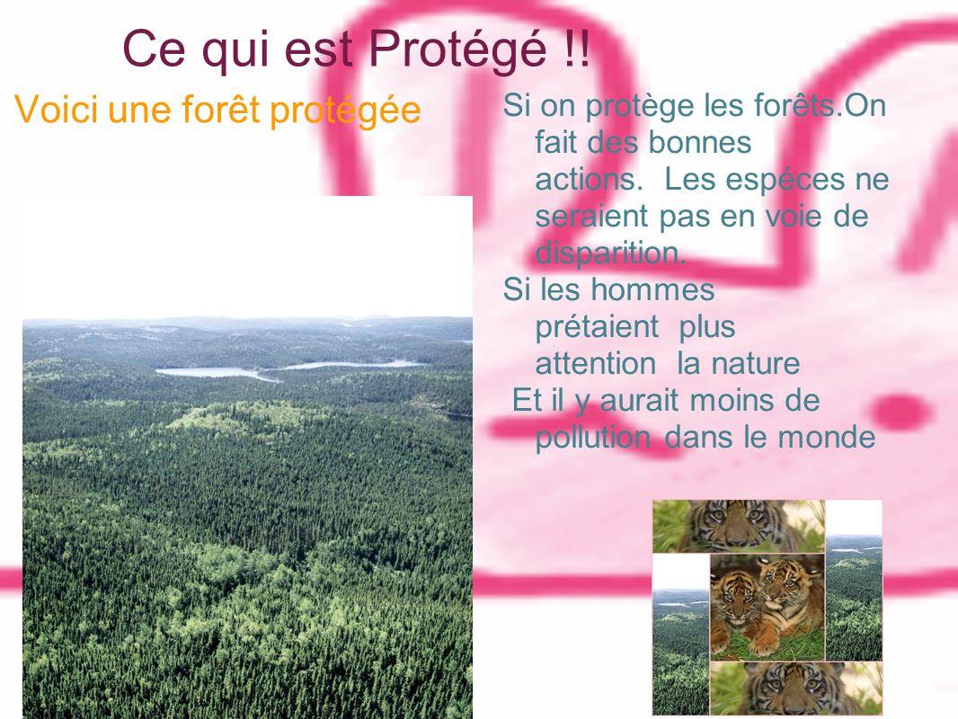 Ce qui est Protégé !! Voici une forêt protégée