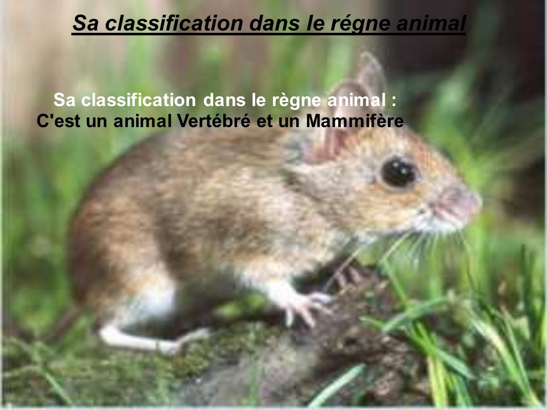Sa classification dans le régne animal