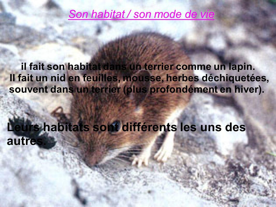 Son habitat / son mode de vie