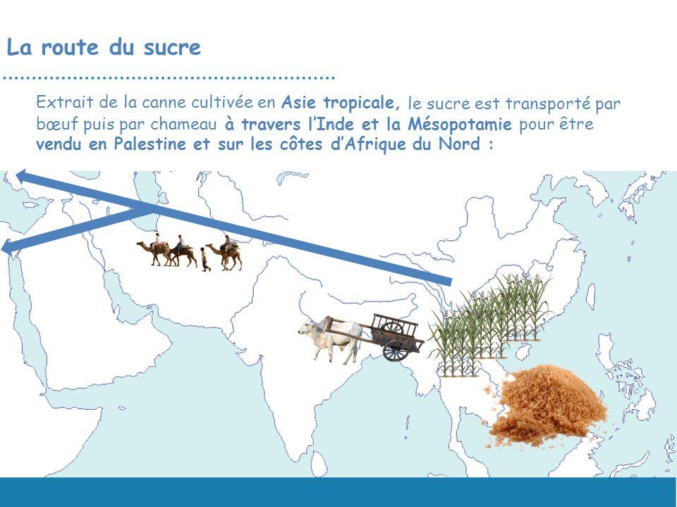 La route du sucre Extrait de la canne cultivée en Asie tropicale,