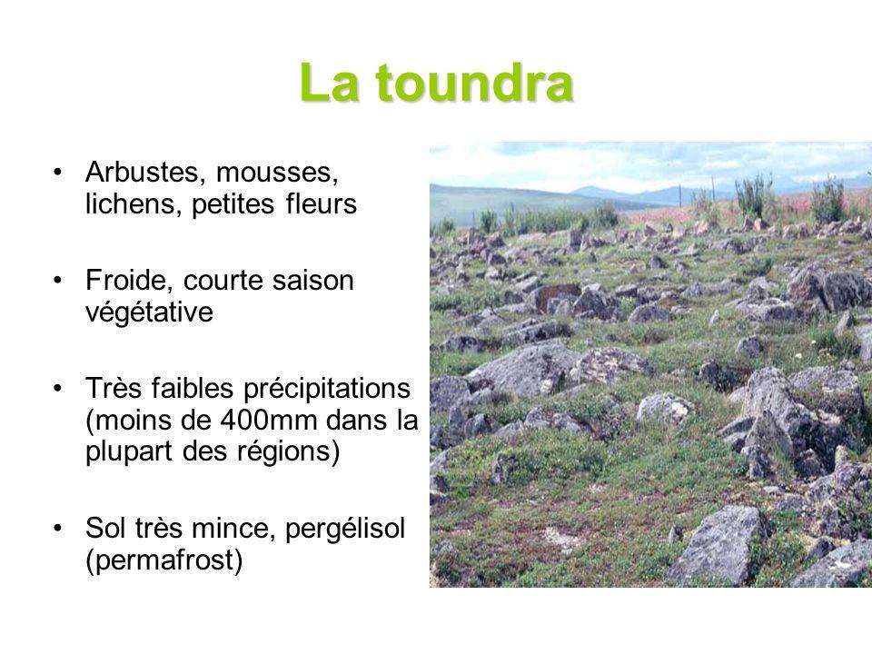 La toundra Arbustes, mousses, lichens, petites fleurs