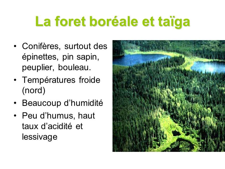 La foret boréale et taïga
