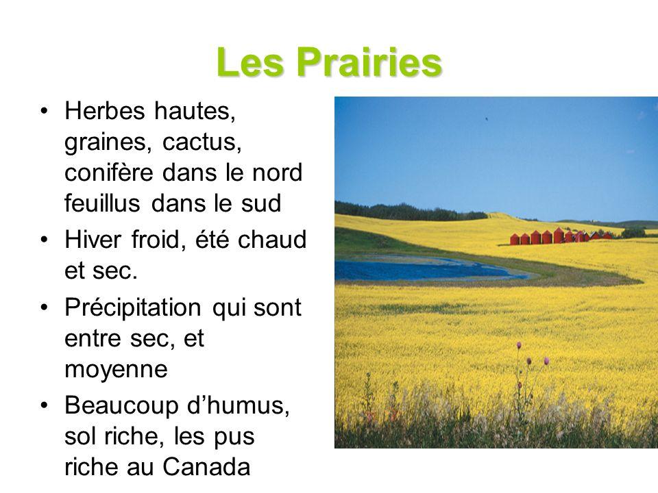 Les Prairies Herbes hautes, graines, cactus, conifère dans le nord feuillus dans le sud. Hiver froid, été chaud et sec.
