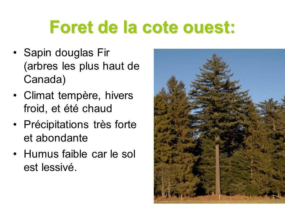 Foret de la cote ouest: Sapin douglas Fir (arbres les plus haut de Canada) Climat tempère, hivers froid, et été chaud.