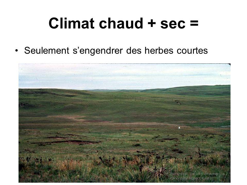 Climat chaud + sec = Seulement s'engendrer des herbes courtes