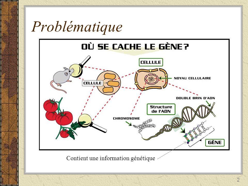 Problématique Contient une information génétique