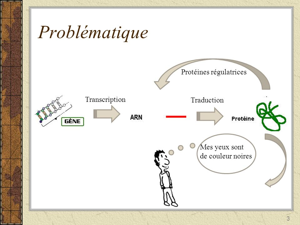 Problématique Protéines régulatrices Transcription Traduction