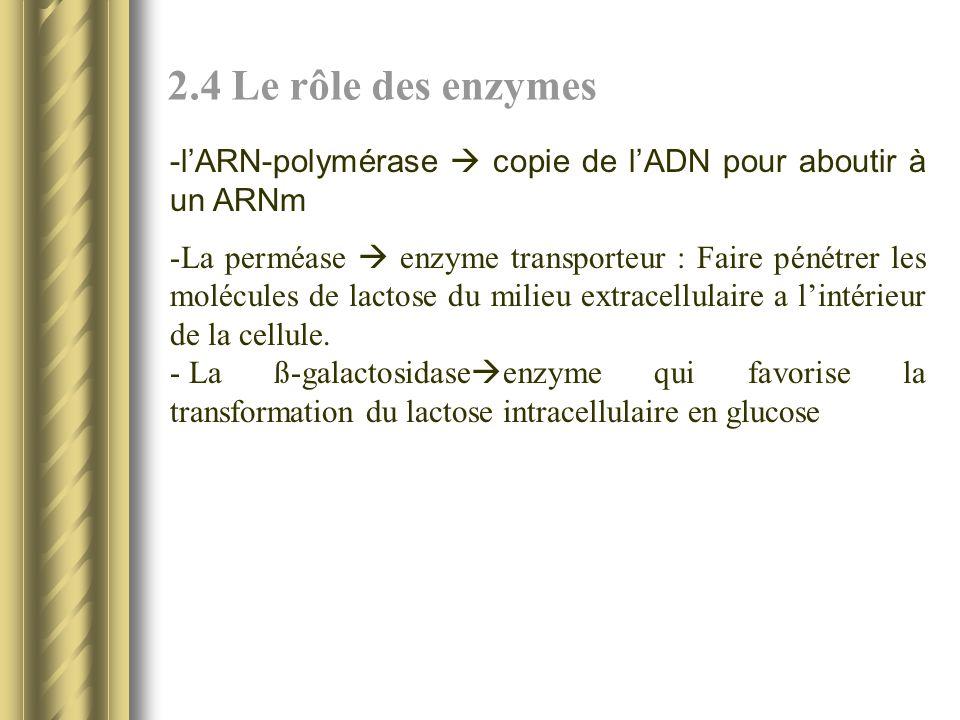 2.4 Le rôle des enzymes l'ARN-polymérase  copie de l'ADN pour aboutir à un ARNm.
