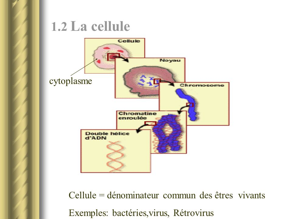 1.2 La cellule cytoplasme. Cellule = dénominateur commun des êtres vivants.