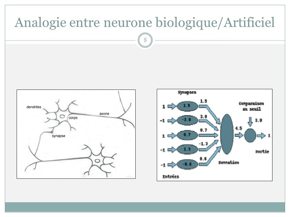 Analogie entre neurone biologique/Artificiel