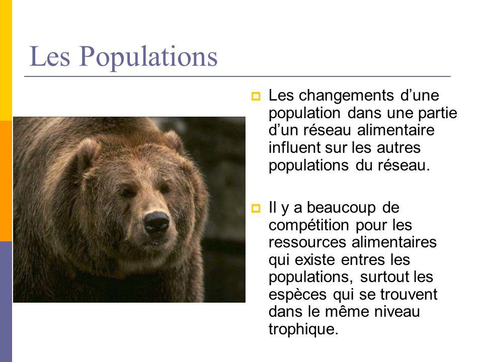 Les Populations Les changements d'une population dans une partie d'un réseau alimentaire influent sur les autres populations du réseau.