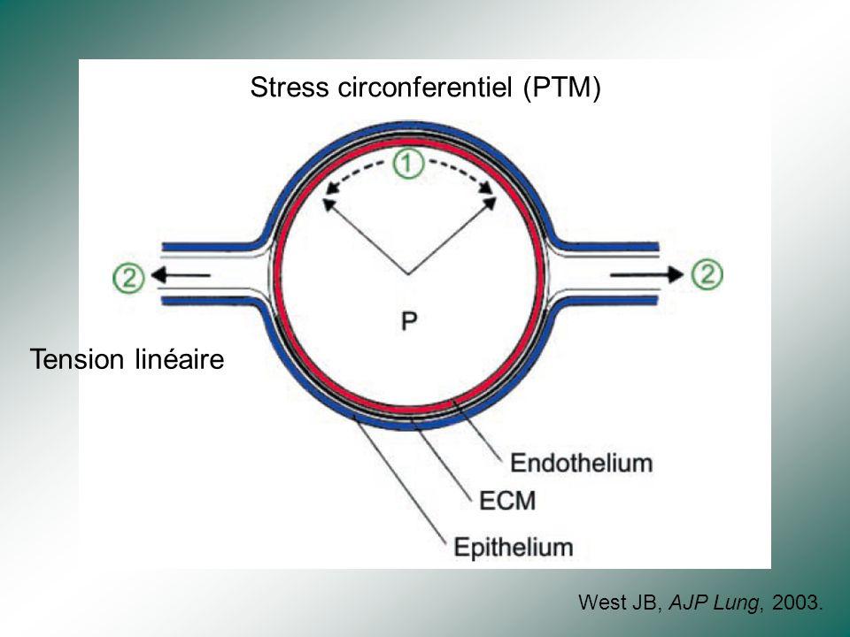 Stress circonferentiel (PTM)