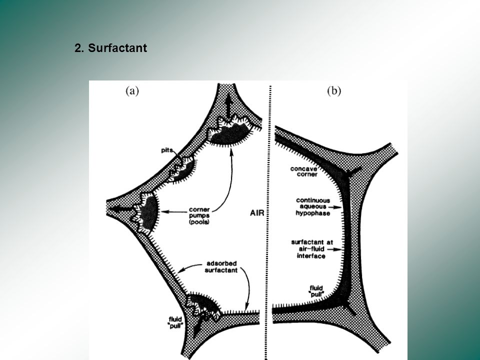2. Surfactant