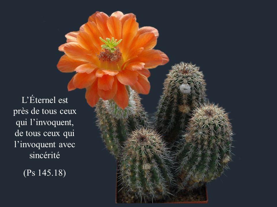 L'Éternel est près de tous ceux qui l'invoquent, de tous ceux qui l'invoquent avec sincérité