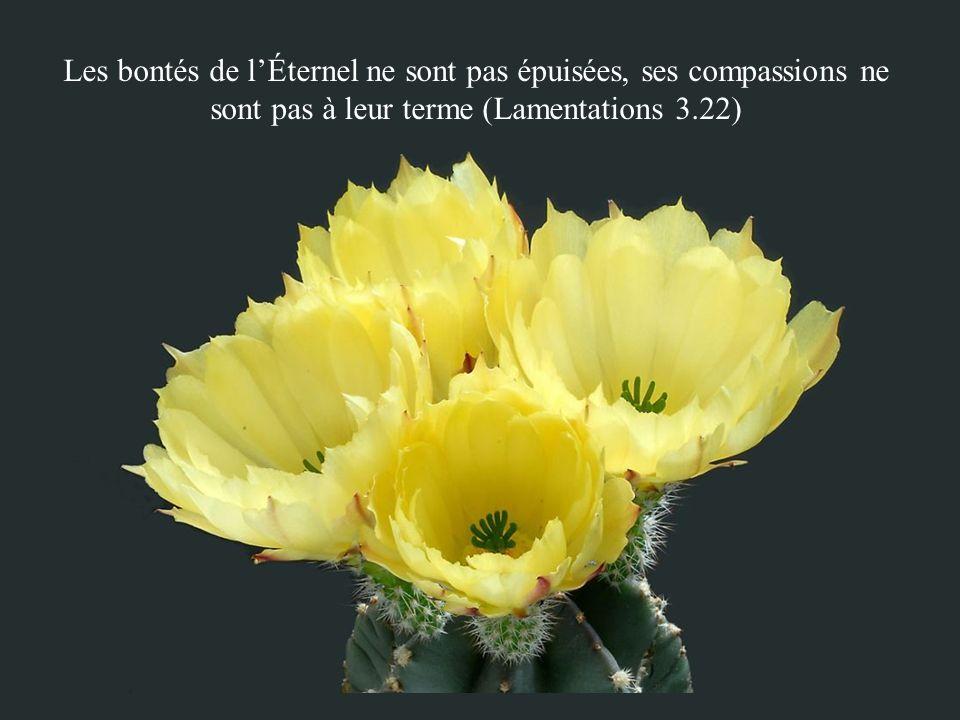 Les bontés de l'Éternel ne sont pas épuisées, ses compassions ne sont pas à leur terme (Lamentations 3.22)