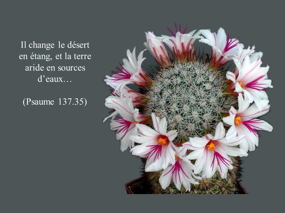 Il change le désert en étang, et la terre aride en sources d'eaux…