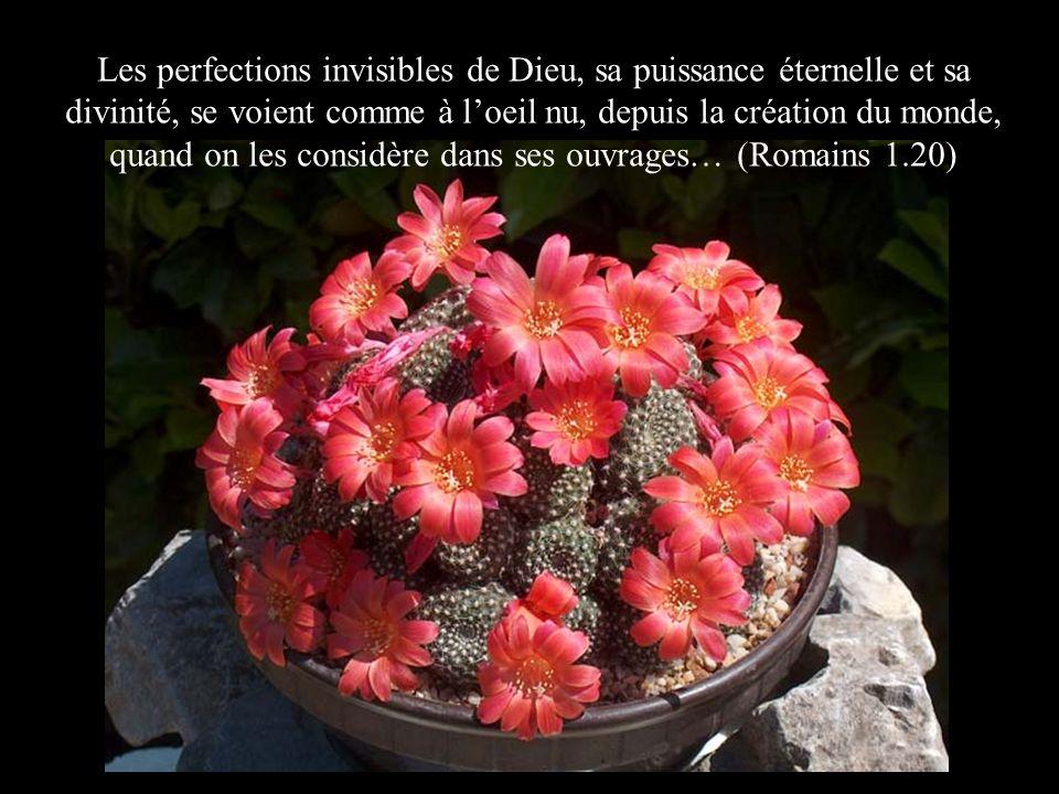 Les perfections invisibles de Dieu, sa puissance éternelle et sa divinité, se voient comme à l'oeil nu, depuis la création du monde, quand on les considère dans ses ouvrages… (Romains 1.20)