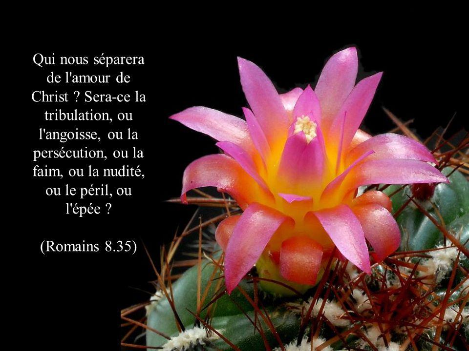 Qui nous séparera de l amour de Christ