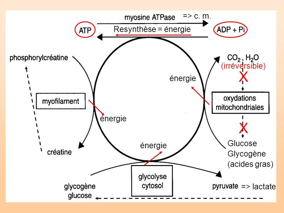 X X => c. m. Resynthèse = énergie (irréversible) énergie énergie
