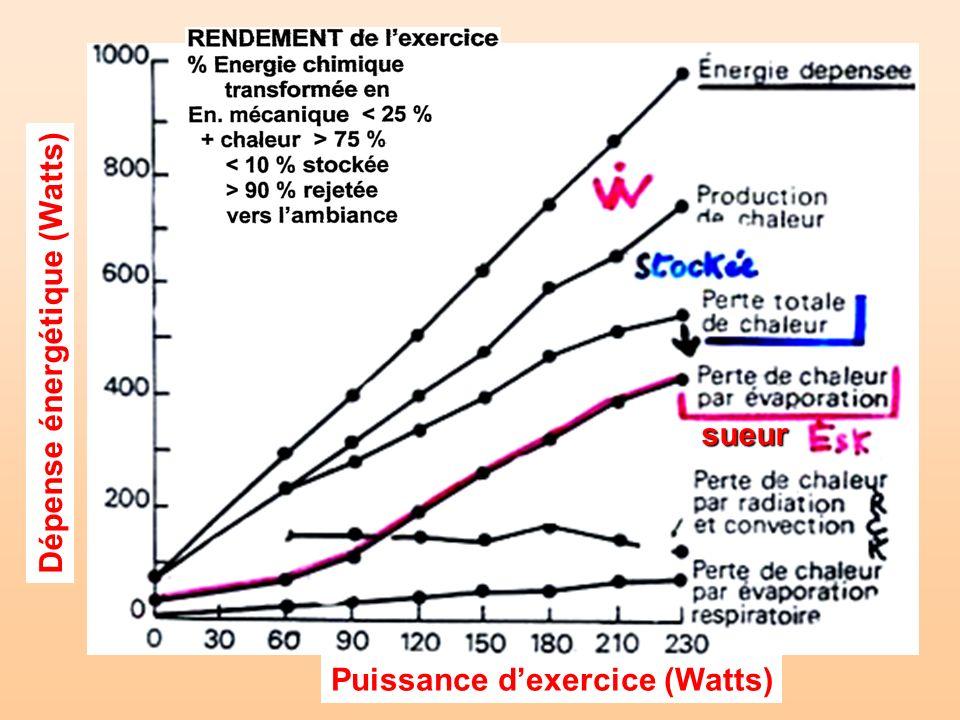 Dépense énergétique (Watts)