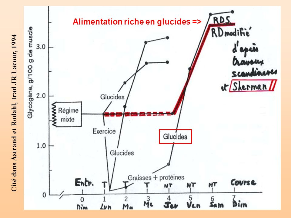 Alimentation riche en glucides =>