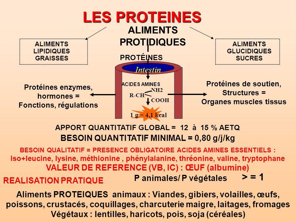 LES PROTEINES ALIMENTS PROTIDIQUES > = 1 Intestin