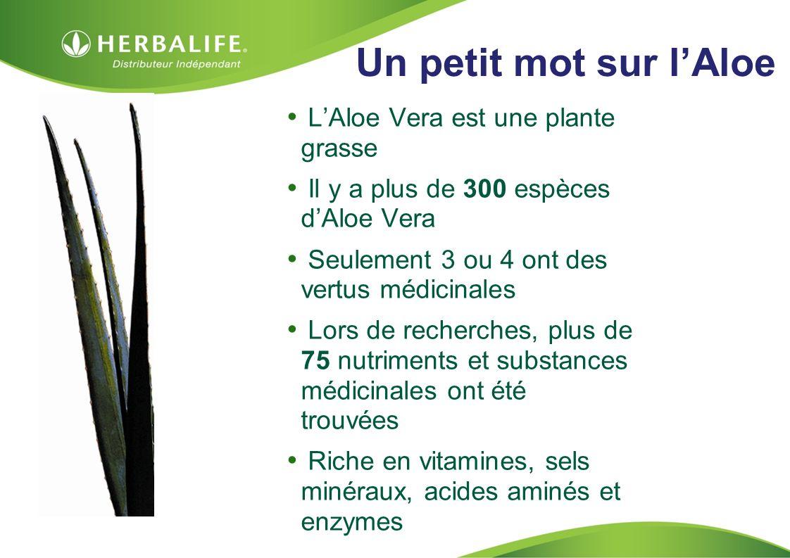 Un petit mot sur l'Aloe L'Aloe Vera est une plante grasse