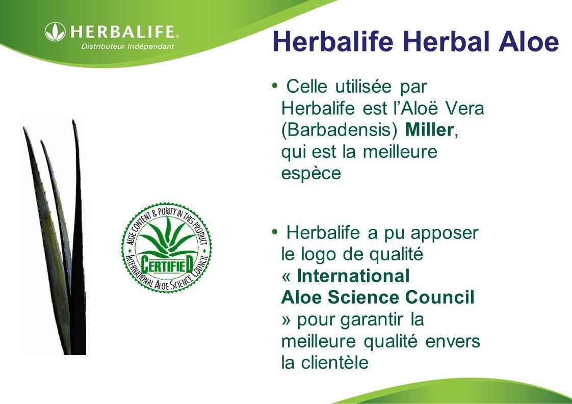 Herbalife Herbal Aloe Celle utilisée par Herbalife est l'Aloë Vera (Barbadensis) Miller, qui est la meilleure espèce.