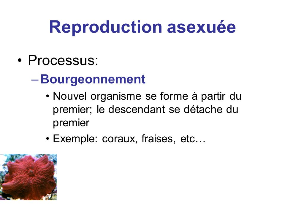 Reproduction asexuée Processus: Bourgeonnement