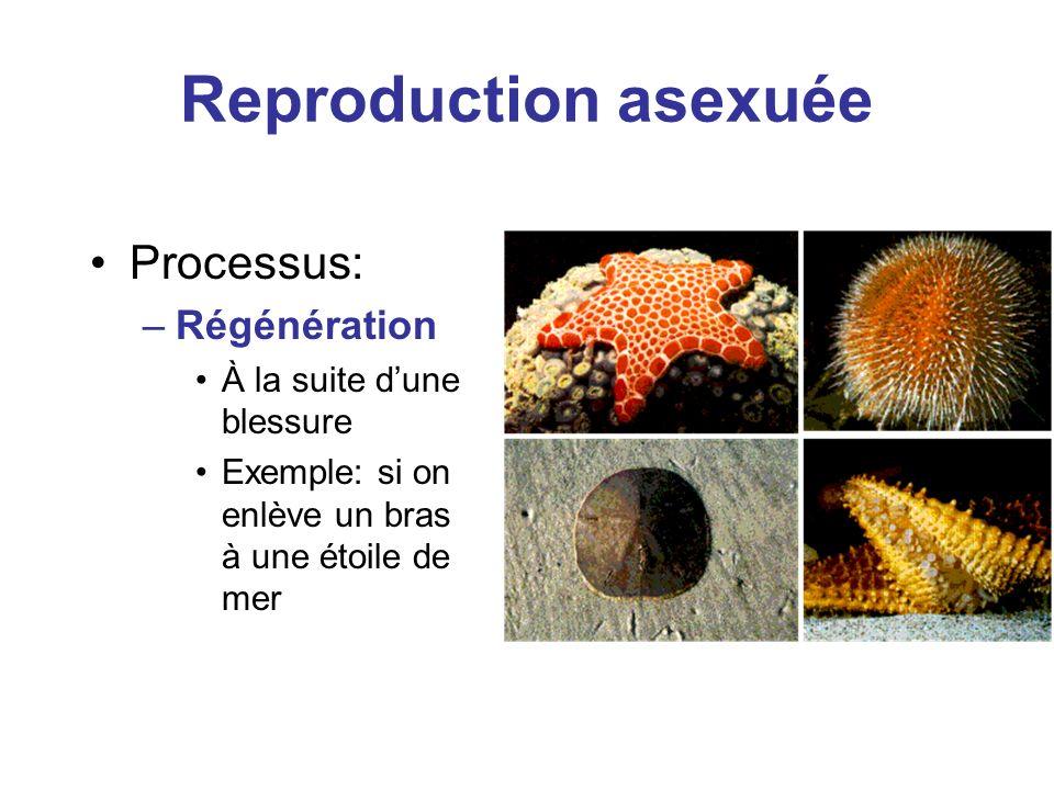 Reproduction asexuée Processus: Régénération À la suite d'une blessure