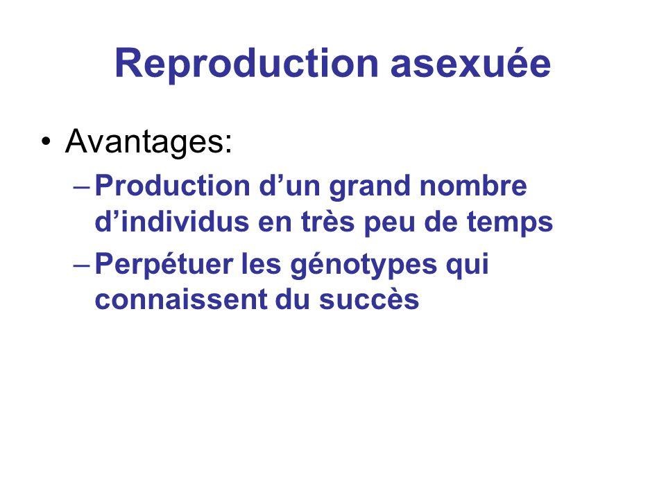 Reproduction asexuée Avantages: