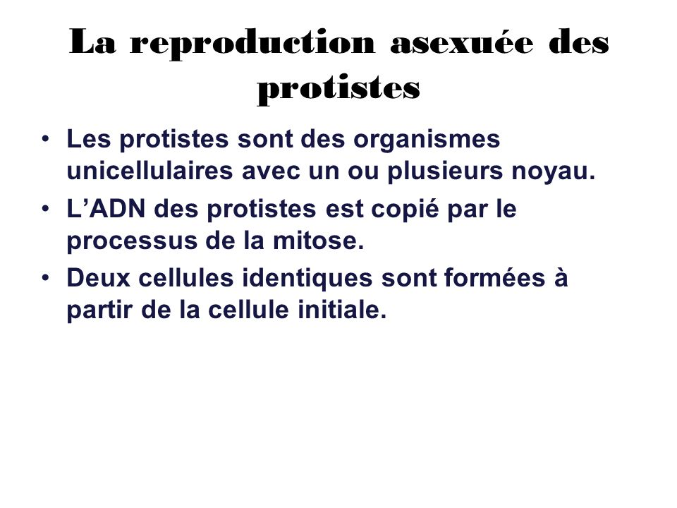La reproduction asexuée des protistes