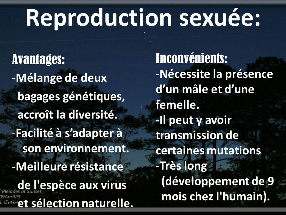 Reproduction sexuée: Inconvénients: