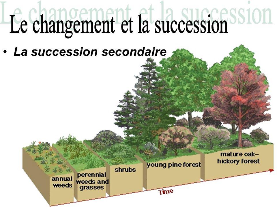 Le changement et la succession