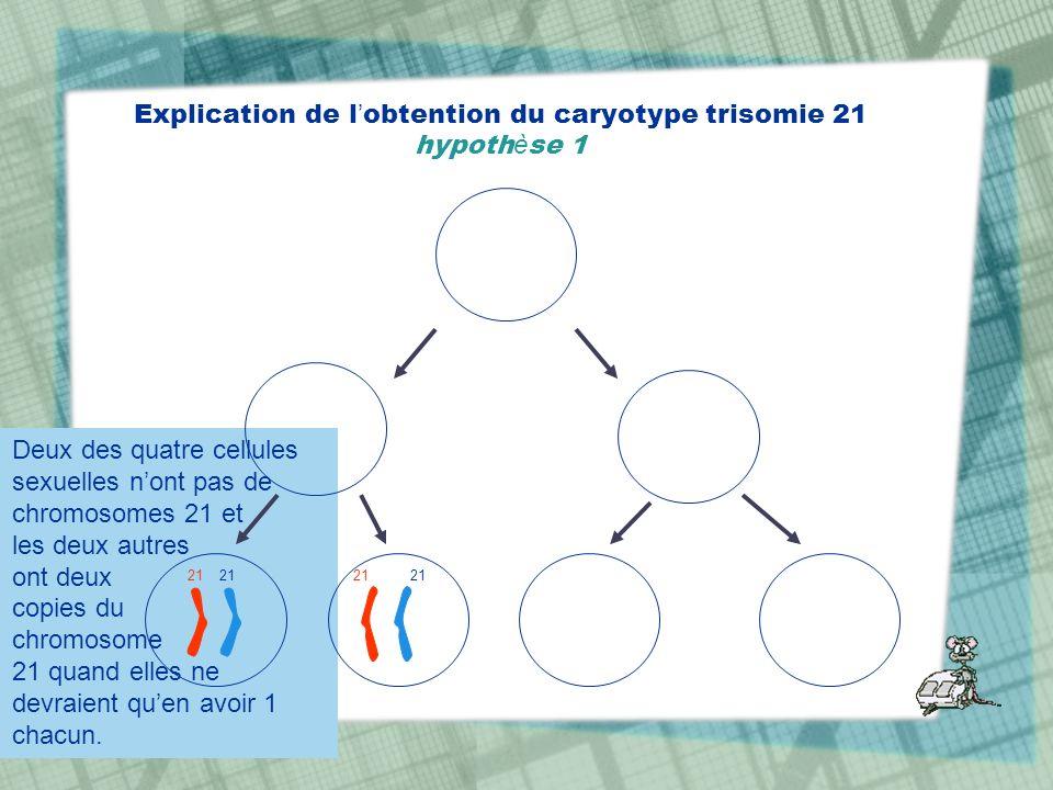 Explication de l'obtention du caryotype trisomie 21 hypothèse 1