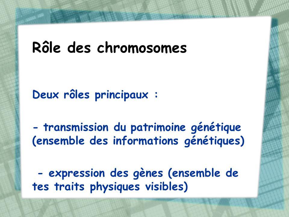 Rôle des chromosomes Deux rôles principaux :