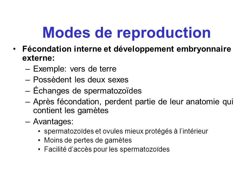 Modes de reproduction Fécondation interne et développement embryonnaire externe: Exemple: vers de terre.