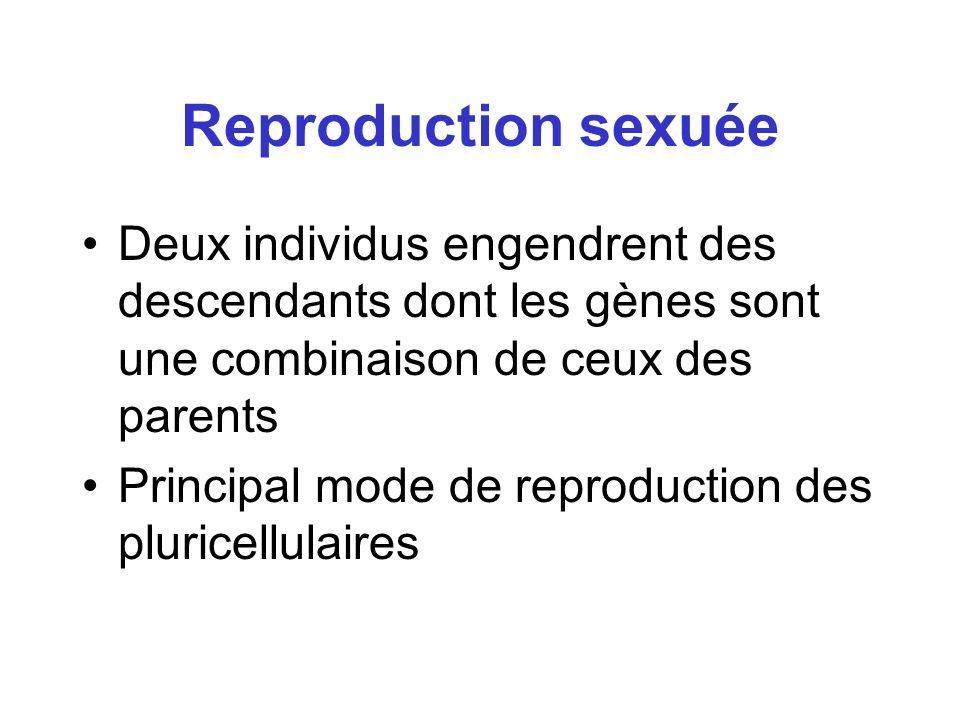 Reproduction sexuée Deux individus engendrent des descendants dont les gènes sont une combinaison de ceux des parents.