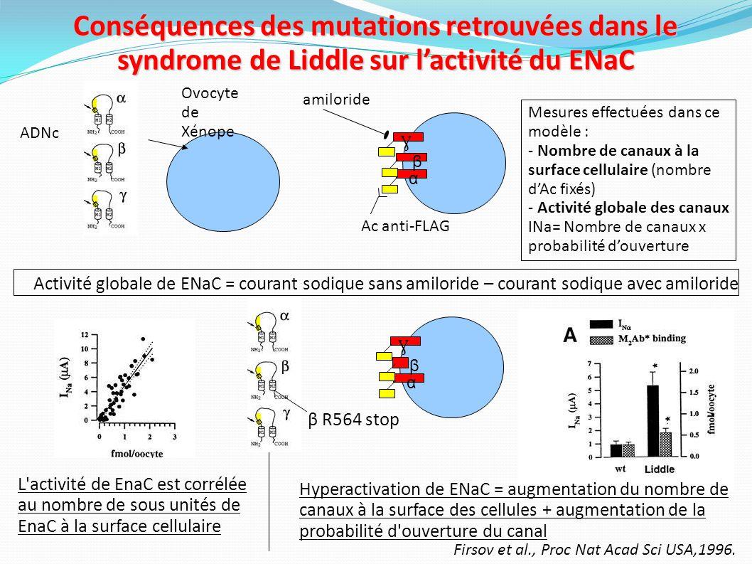 Conséquences des mutations retrouvées dans le syndrome de Liddle sur l'activité du ENaC