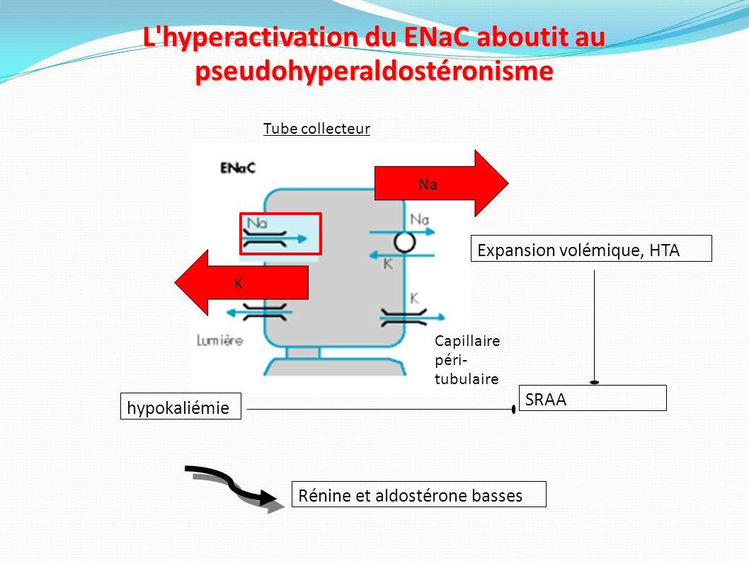 L hyperactivation du ENaC aboutit au pseudohyperaldostéronisme