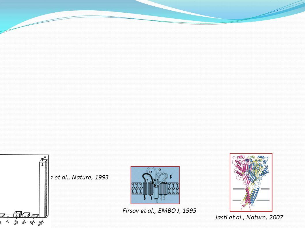 Canessa et al., Nature, 1993 Firsov et al., EMBO J, 1995 Jasti et al., Nature, 2007