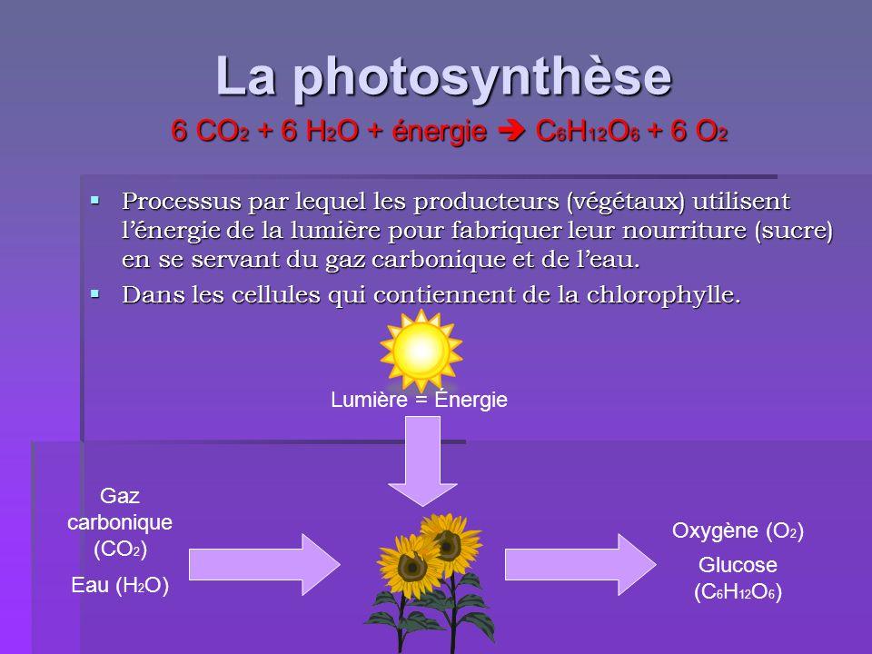 La photosynthèse 6 CO2 + 6 H2O + énergie  C6H12O6 + 6 O2