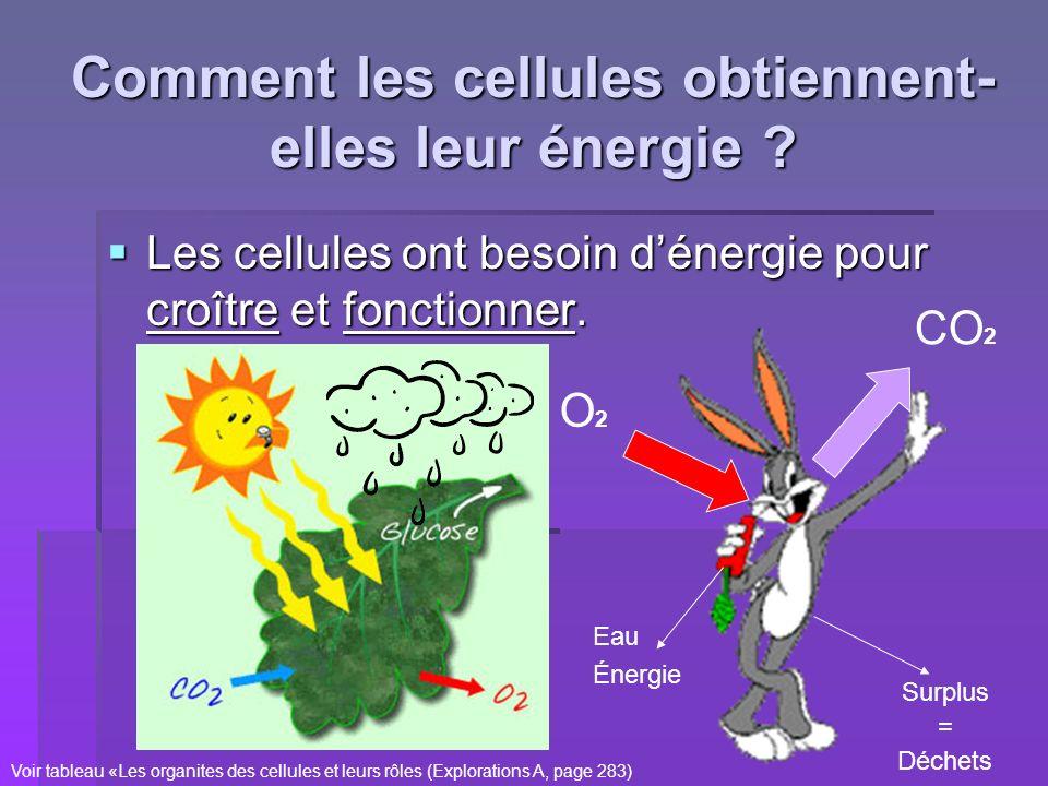 Comment les cellules obtiennent-elles leur énergie