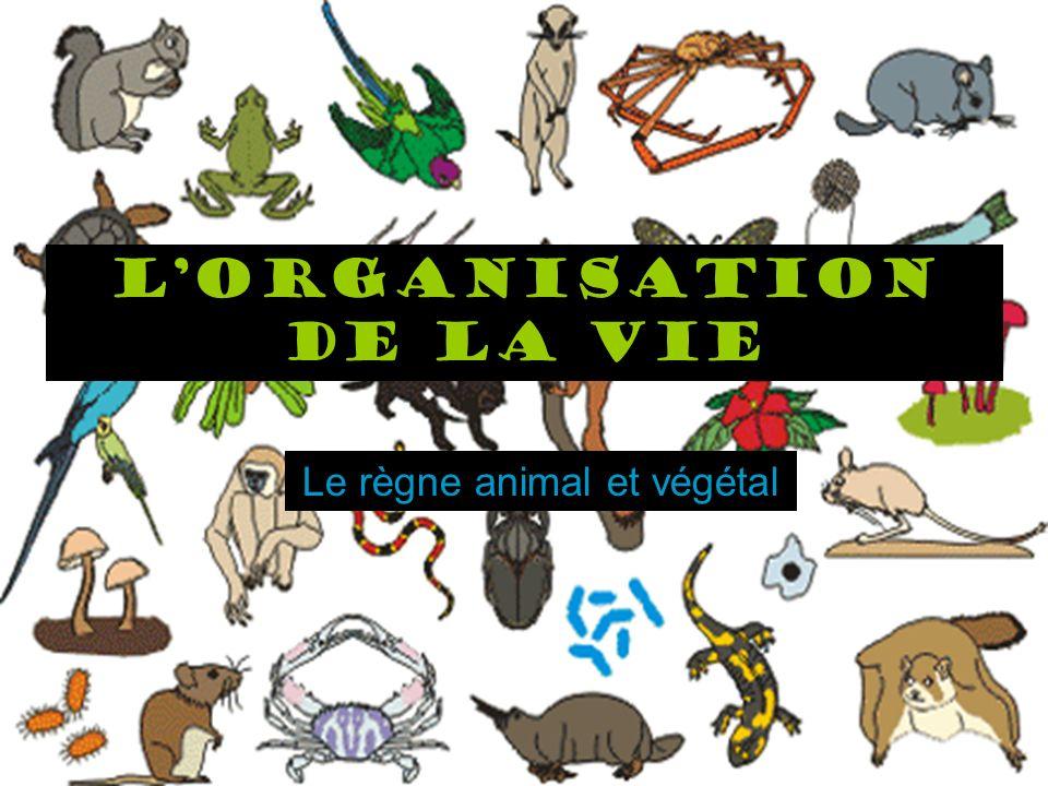 L'organisation de la vie