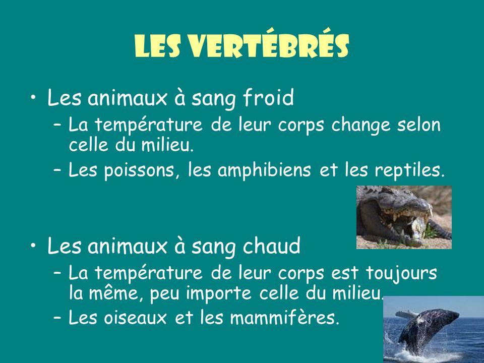 Les vertébrés Les animaux à sang froid Les animaux à sang chaud