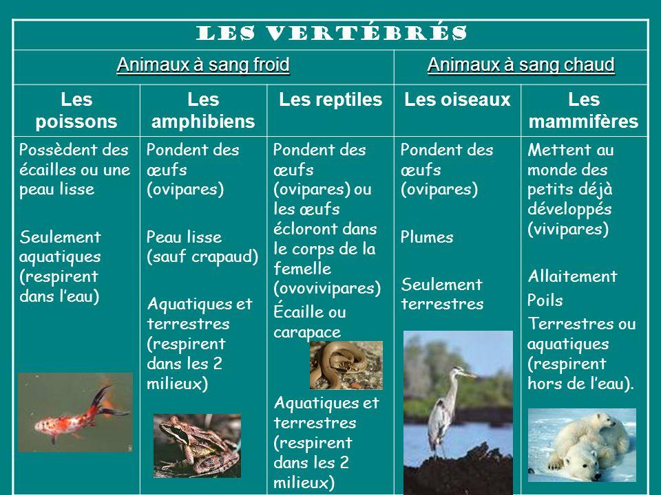 Les poissons Les amphibiens Les reptiles Les oiseaux Les mammifères